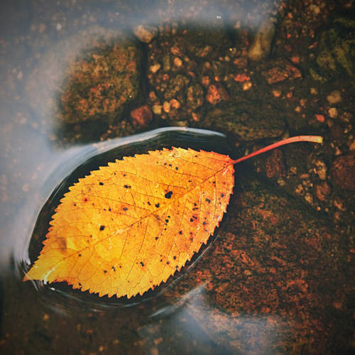bladeren in de vijver