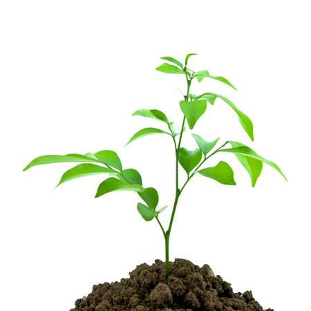 boom planten in de herfst