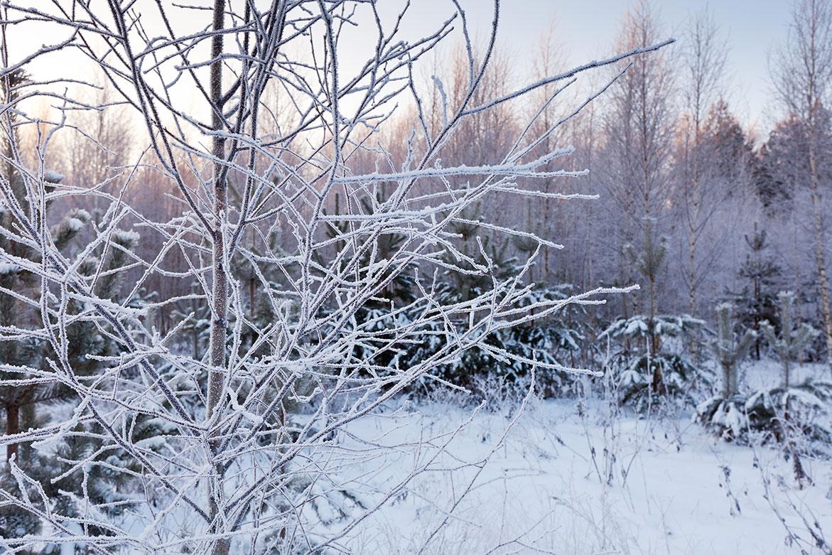 winterse verzorging tuin