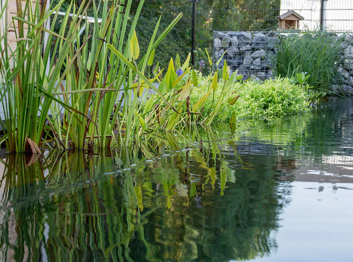 voorjaar en vijver aanleggen of renoveren