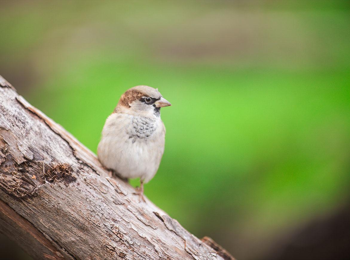 Meer vogels in de tuin