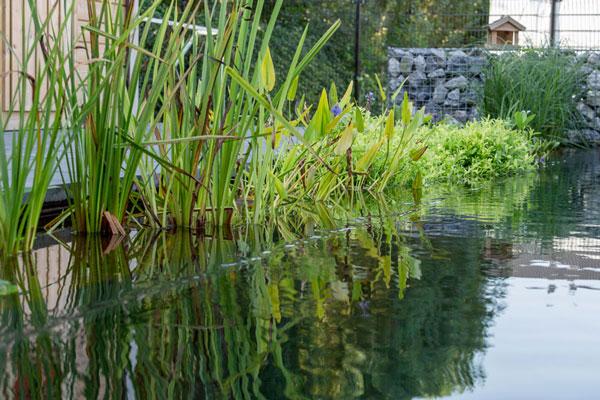spiegeleffect creëren door vijver