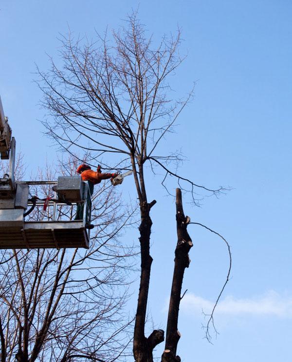 boom snoeien in najaar