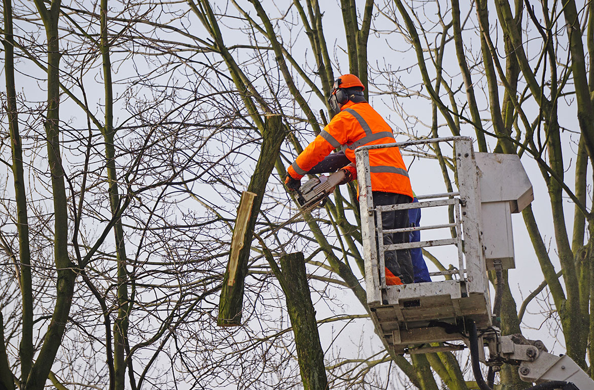 November bomen snoeien en borders bemesten