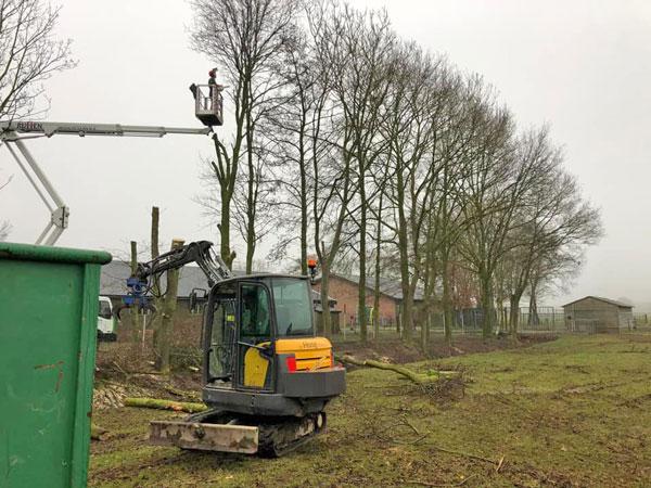 Snoeiwerkzaamheden aan de bomen
