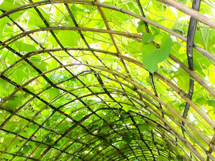 schaduw in tuin door begroeid prieel
