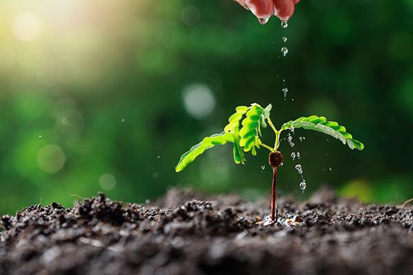 Boom planten