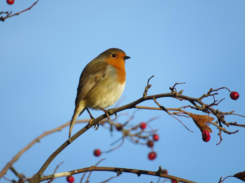 Meer vogels in de wintertuin