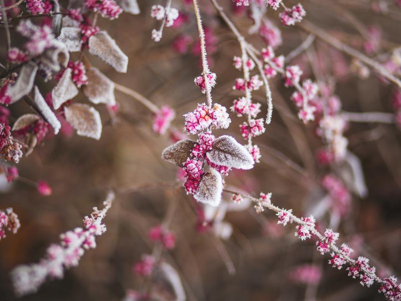 Kleurrijke winter bloemen in de tuin